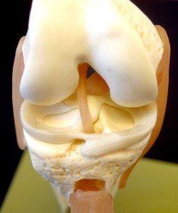 meniscus-250x300